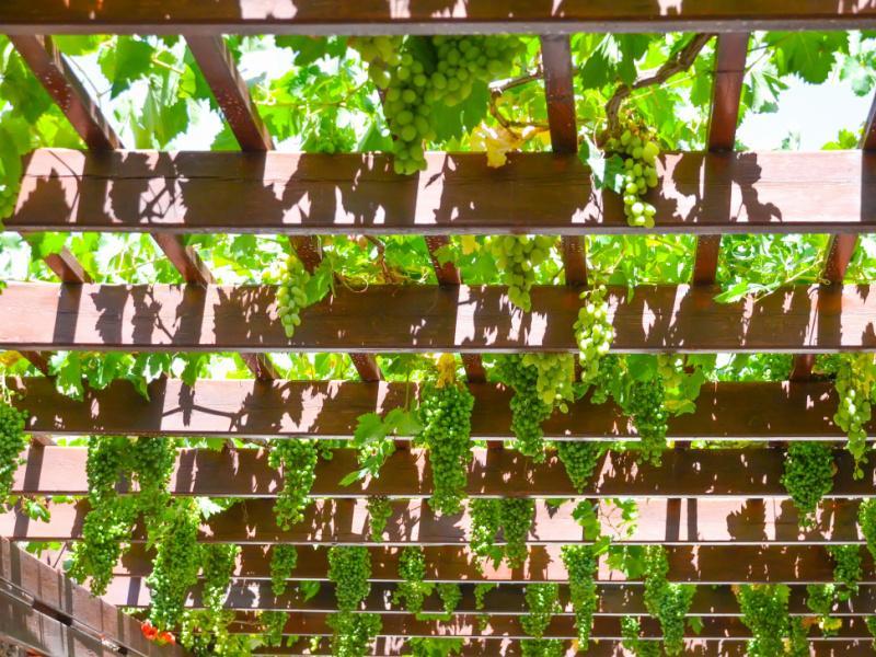 Clôture, carport et pergola : délimiter des espaces dans son jardin